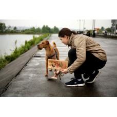 Почему в России культура выгула собак не развита